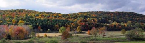 Open farmland. Pond.